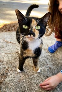 A young calico cat with a fierce stance and vibrant green eyes