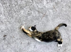 Shot from above of a cat on its side, stretching its paws out and arching its back